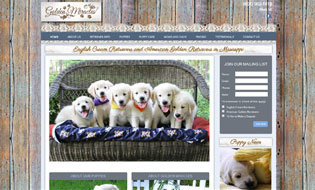 English Cream Golden Retriever Puppies and American Golden Retriever Puppies by Golden Miracles